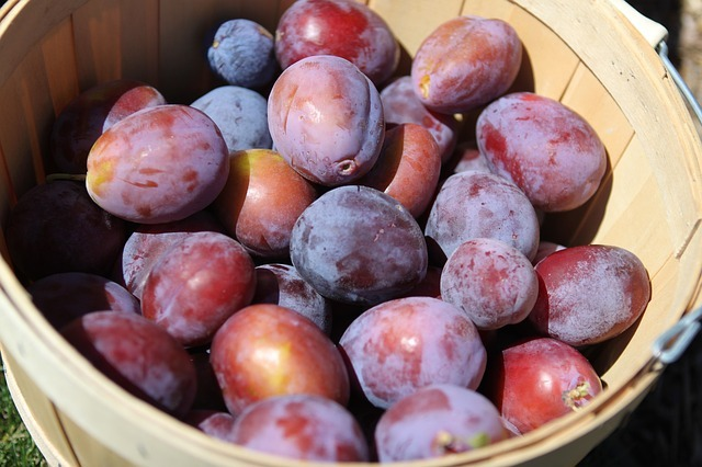 Prunes for Diabetes